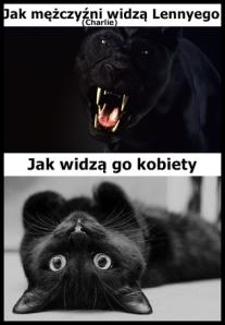 dziki-kot-czarna-pantera-vert