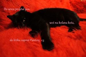 kot-czarny-wylegiwanie
