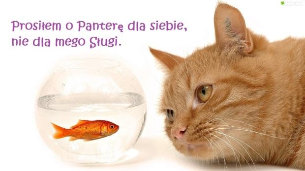 kotek-rybka